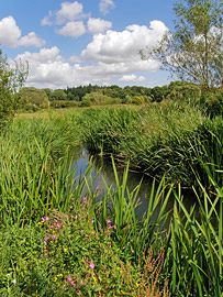 Itchen Valley Nature Reserve - lowland meadows, floodplain grazing marsh and fens.