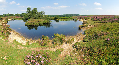Broomy Pond, New Forest
